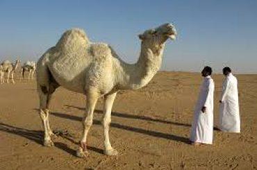 Saudi Arabia Sets Output Record